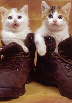 Chats%20shoes